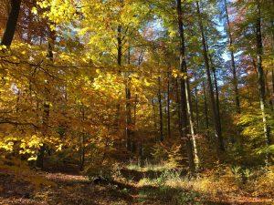 Steigerwald Wanderung