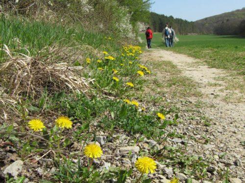 Wanderung Gössenheim