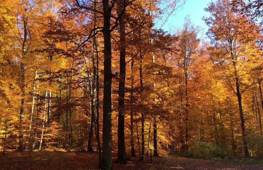 Herbstliche Steigerwald-Wanderung
