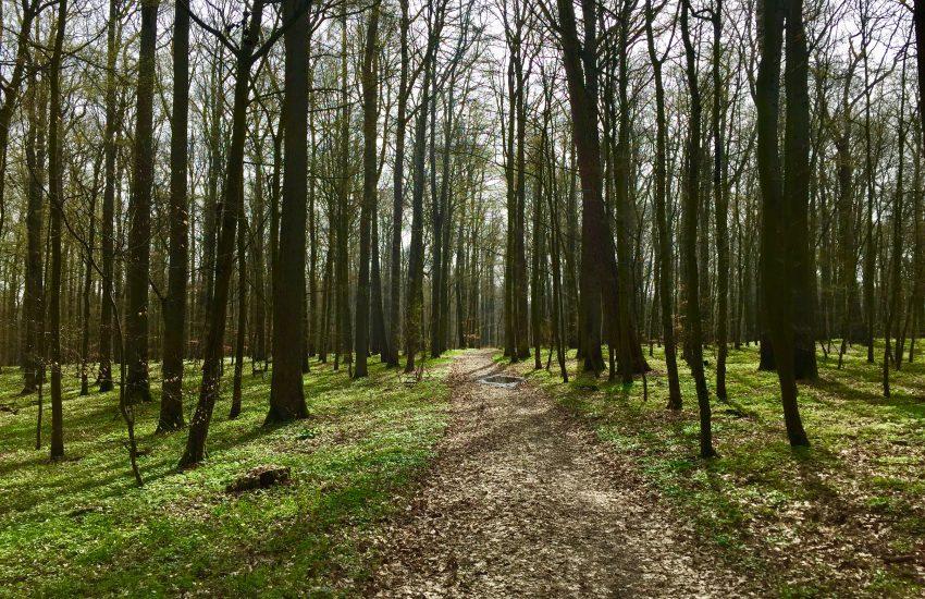 Maidbronner Wald
