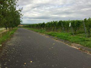 Radweg Sommerach