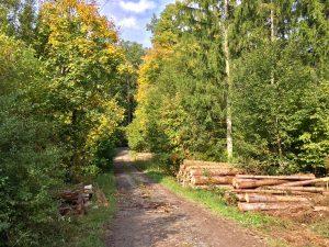 Gramschatzer Wald