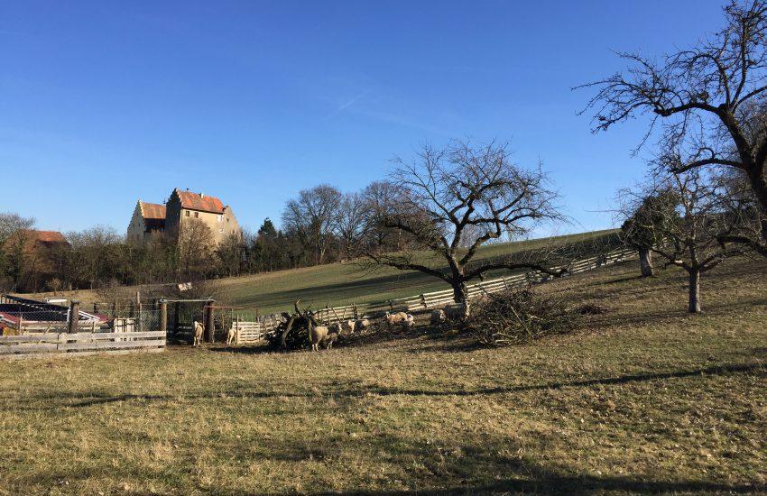 Schloss Klingenberg
