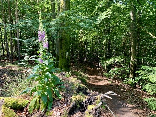 Steigerwald-Panoramaweg